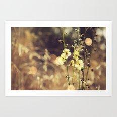 Summer Fields | 02 Art Print