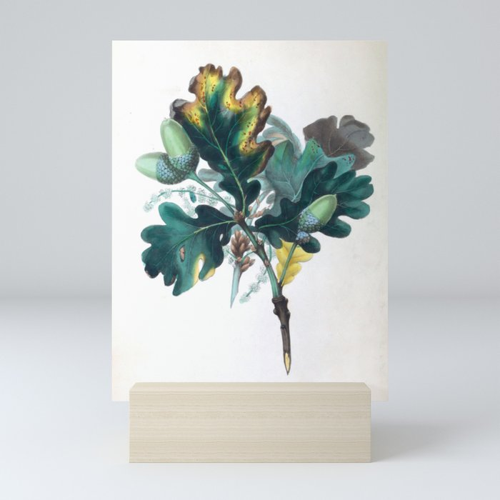 """The Oak, from """"The Spirit of the Woods,"""" 1849 (benefiting the Arbor Day Foundation) Mini Art Print"""
