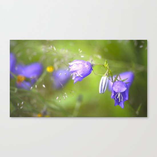Bluebells in The Meadow  Canvas Print