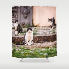 Street Cats from Brazil Shower Curtain