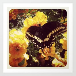Butterfly with orange flowers Art Print