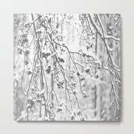 Cloudy Day In The Forest B&W Snowy Rowan Branches With Berries #decor #society6 #homedecor Metal Print
