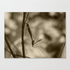 mayflies 2017 (bug porn) II Canvas Print