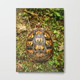 Eastern Box Turtle Shell Pattern  Metal Print