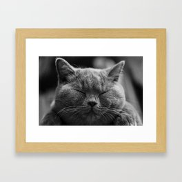 British Shorthair Cat Framed Art Print