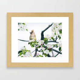 Amongst the Blossoms by Teresa Thompson Framed Art Print