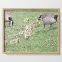 Baby Canadian Geese, Wild Geese, Animals in the Wild Serving Tray