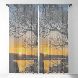 Sunrise Under the Wedge Tree Sheer Curtain