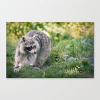 racoon Canvas Prints featuring Racoon by Ruslana S