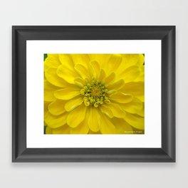 Bright Yellow Zinnia Flower Framed Art Print