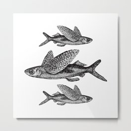 Flying Fish   Vintage Flying Fish   Black and White   Metal Print