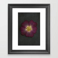 Pressed Wild Rose Framed Art Print