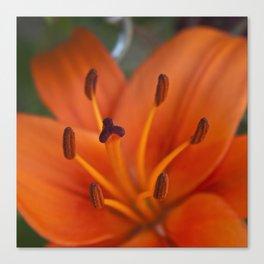 Orange Tiger Lily Canvas Print