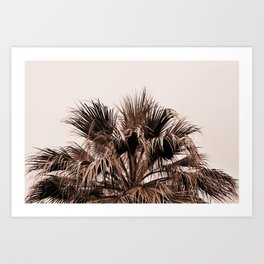 Palm tree top monochrome Art Print