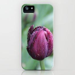Purple tulip iPhone Case