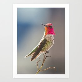 King of the Hummers Art Print