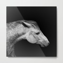 Casper | Horse Photography | Animal Art | Minimalism | Nature | black-and-white Metal Print