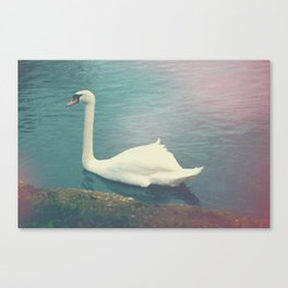 Oxford Swan Canvas Print