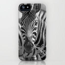 Zebra with grass, Africa wildlife iPhone Case