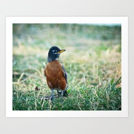 Rock'n Robin Art Print