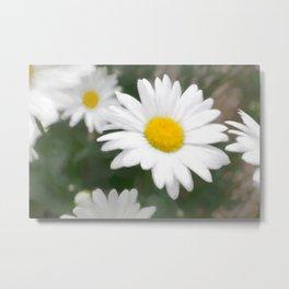 Daisies flowers in painting style 6 Metal Print