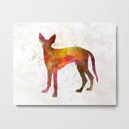Ibizan Hound in watercolor Metal Print