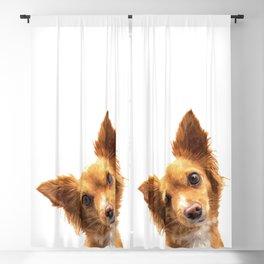 Curious Dog Portrait Blackout Curtain