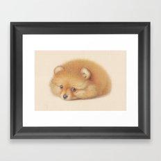 Ginger Pom puppy Framed Art Print
