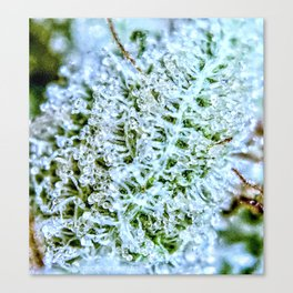 Frosty Dank Top Shelf Bud Canvas Print