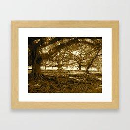 Sri Lankan Orchard Framed Art Print