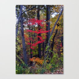 Floating Red Maple Canvas Print
