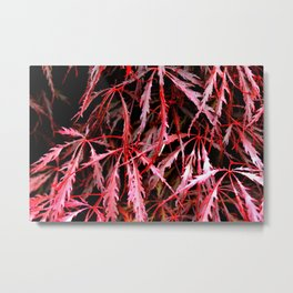 Maroon Maple Metal Print