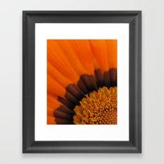 Orange Gazania Framed Art Print