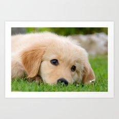 Golden Retriever puppy, cute dog Art Print
