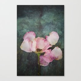 Wilted Rose II Canvas Print
