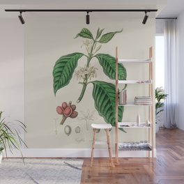 Vintage Coffee Bean Botanical Illustration Wall Mural