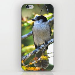 Gray is the new black! iPhone Skin