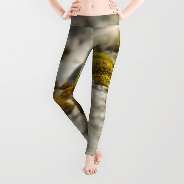 Beachwood Photography Print Leggings