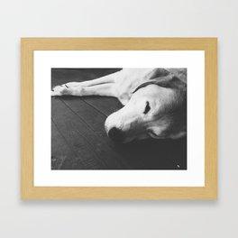 Napping Dog  Framed Art Print