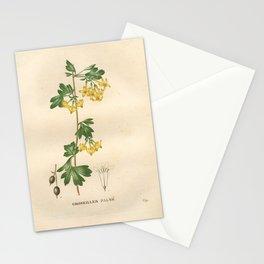 Flower groseiller palme (Fr)27 Stationery Cards