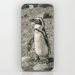 Black and White African Penguin - Photography #Society6 iPhone Skin