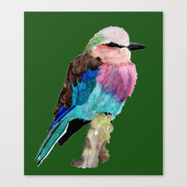 Lilac Breasted Roller Bird Canvas Print