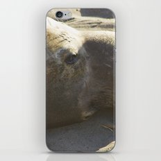 Elephant Seal: Contemplation iPhone Skin