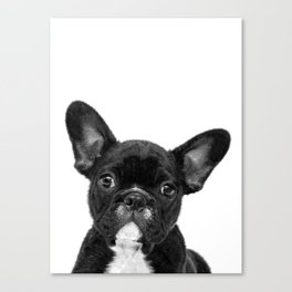 Black and White French Bulldog Canvas Print