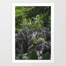 Cayman Plants Art Print