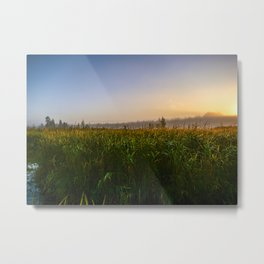 Cloudless sky in the sunlight over a grassy swamp on sunrise Metal Print