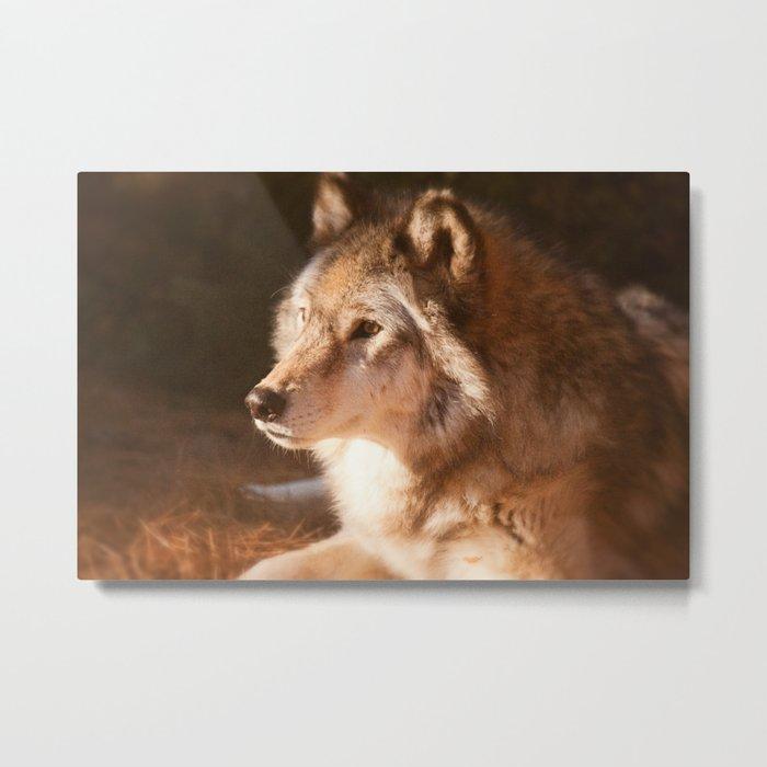 Wolf Beauty Metal Print