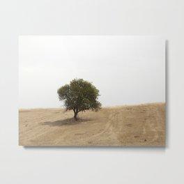 The solitary holm oak Metal Print