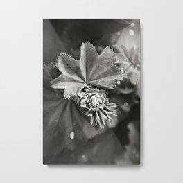 Secret Garden ~ No.11 Metal Print