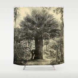 The Coqaito Nut or Wine Palm Shower Curtain